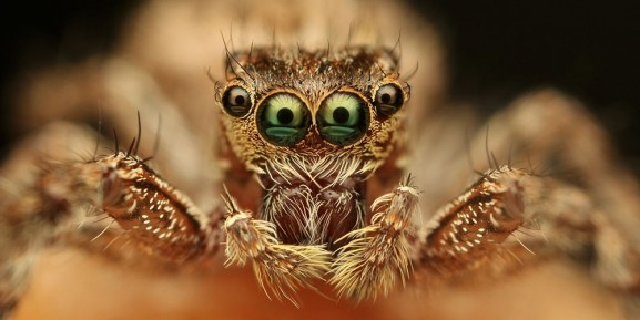 Eyes of the Spider