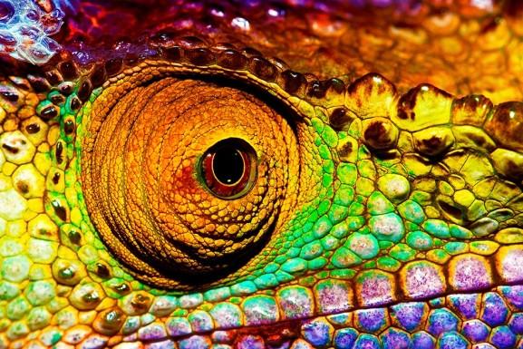 Cameleon Eye