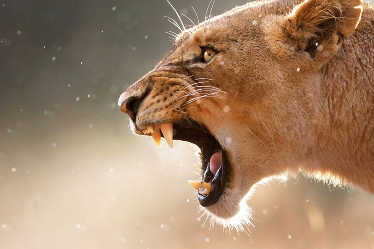 Untamed South Africa